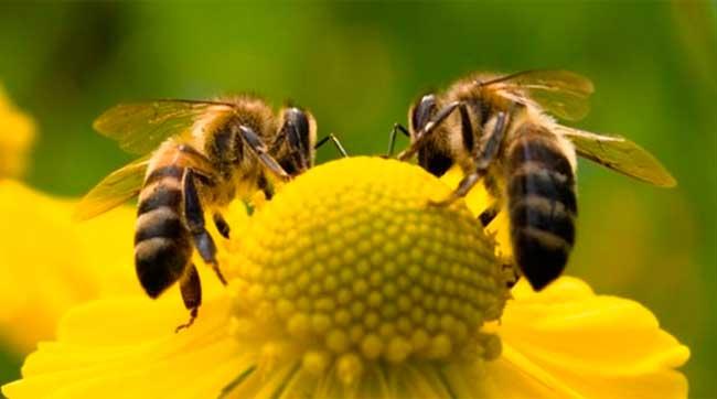 Nutrición y alimentación de la abeja